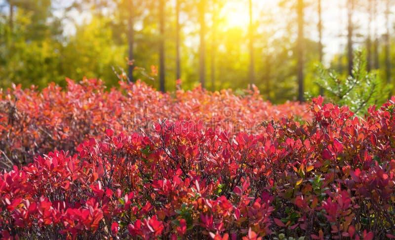 Im hellen Herbstwald lizenzfreie stockbilder