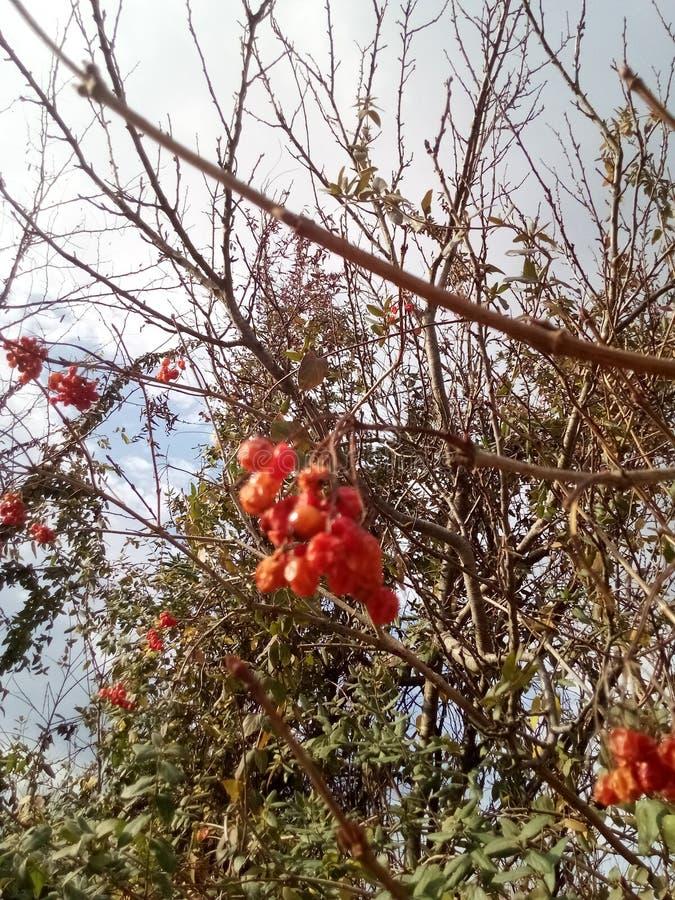Im Herbst der Blattfall stockbild