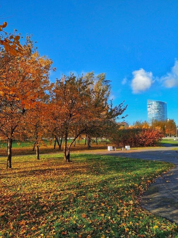 Im Herbstpark stockfoto