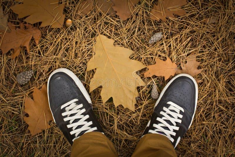 Im Herbstwald stockfotografie