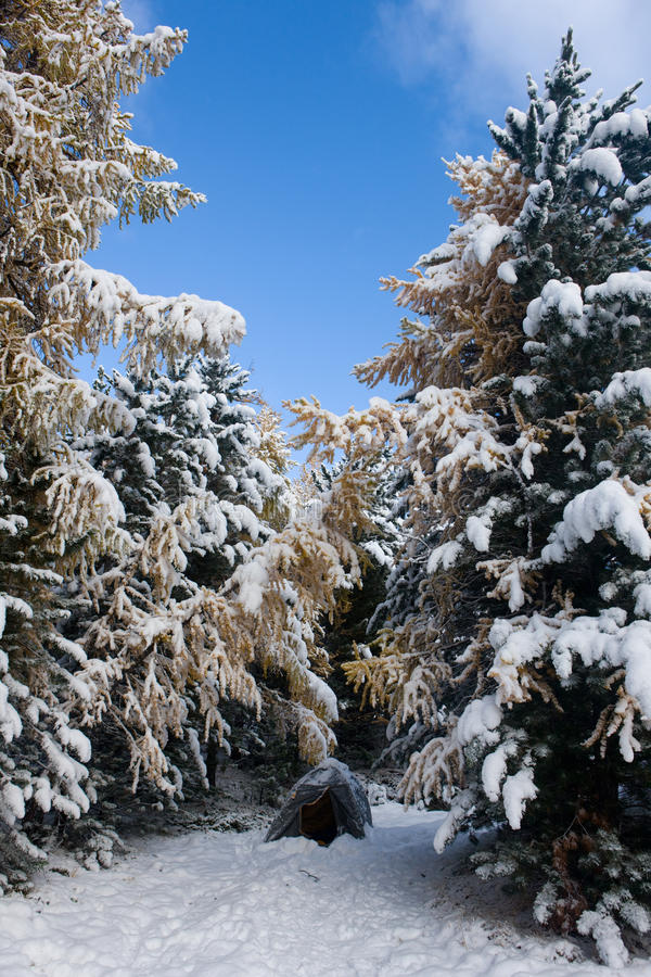 Im Holz nach Schneefälle stockfoto