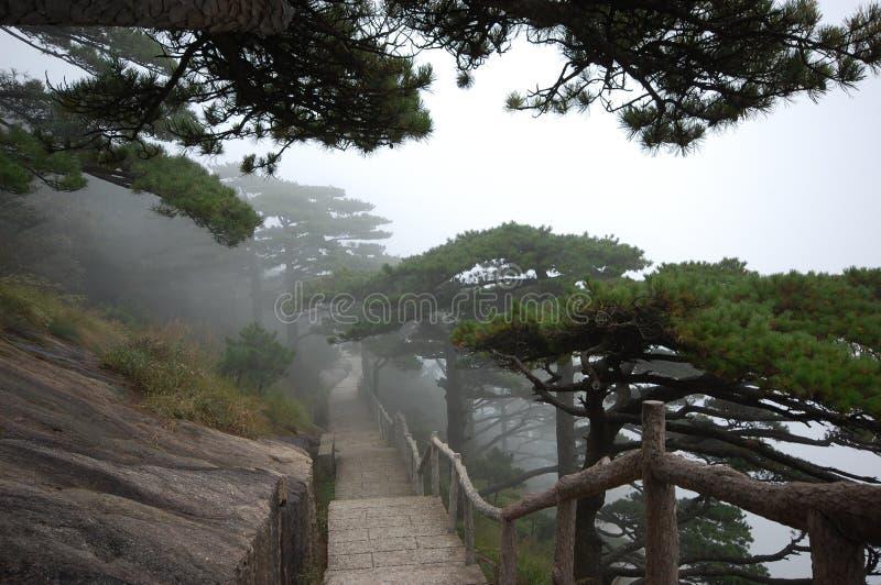 Im Nebel stockfotos