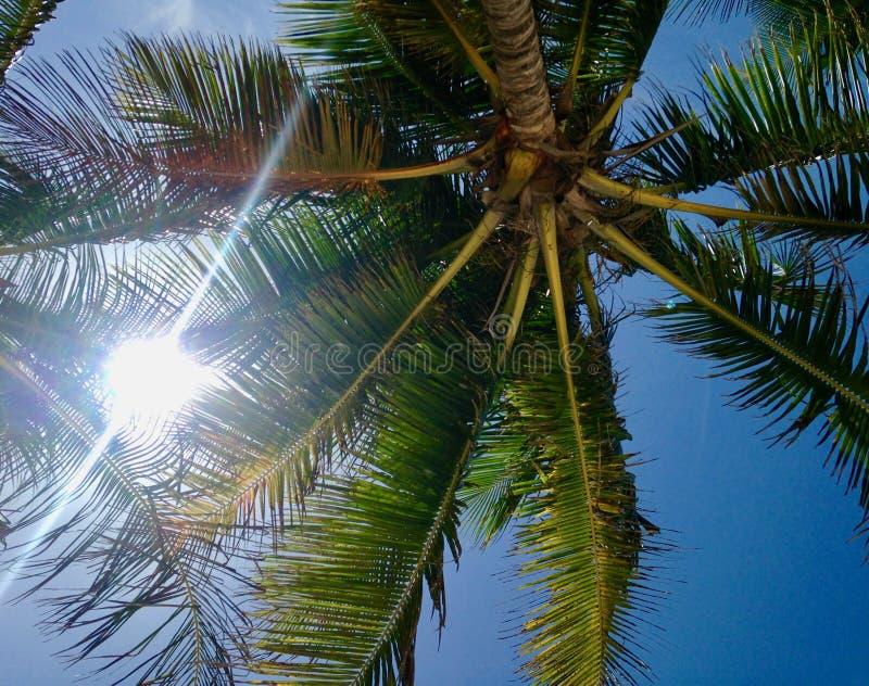 Im Schatten der schönen Kokosnussbäume lizenzfreies stockbild
