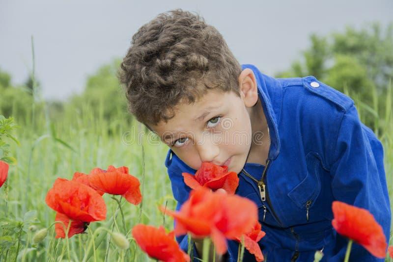 Im Sommer auf den gelockten Jungenschnüffelnmohnblumen lizenzfreie stockbilder
