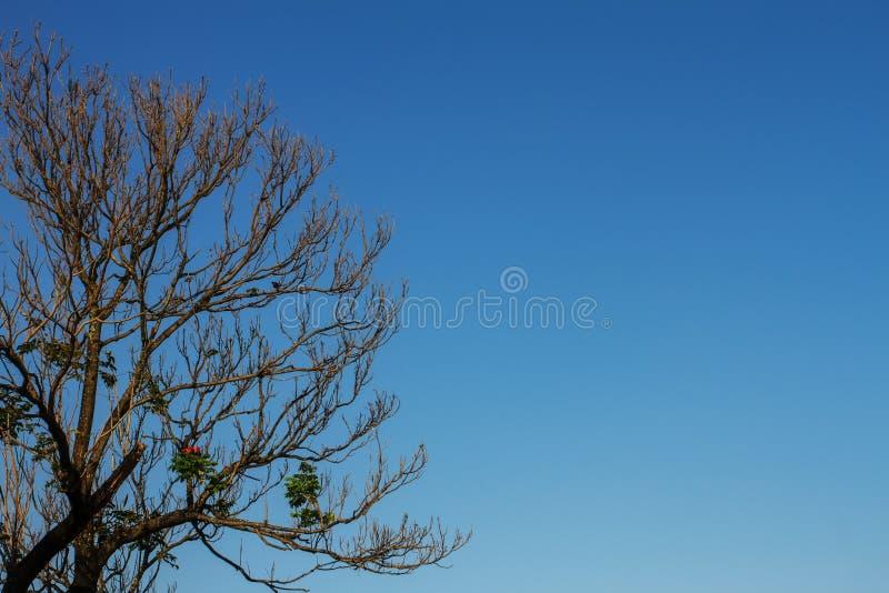 Im Sommer Die Bäume sind größtenteils laubwechselnd, die im Himmel als Hintergrund stockfotos