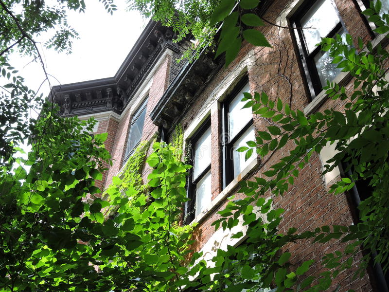 Im Stadtzentrum gelegene städtische Grün-Architektur-Anhäufung stockfotos