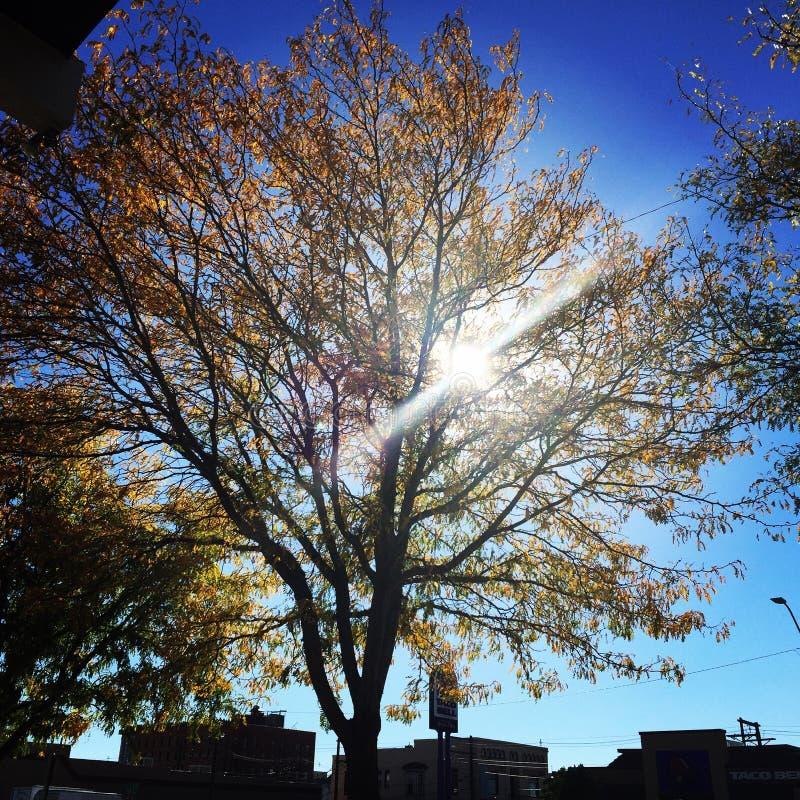 Im Stadtzentrum gelegener Sonnenscheinherbst stockfoto