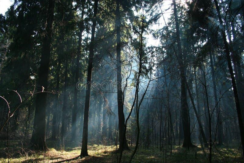 Im Wald. lizenzfreie stockbilder