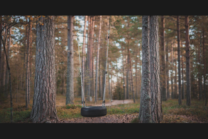 Im Wald lizenzfreie stockfotografie