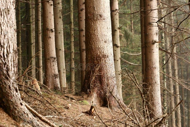 Download Im Wald stockfoto. Bild von landschaft, landwirtschaftlich - 870328