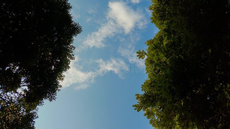 Im Wald Betrachten des Himmels stockbild