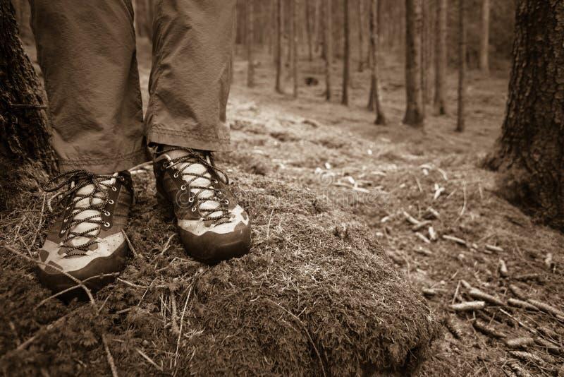 Im Wald gehen lang ein Weg stockfotografie