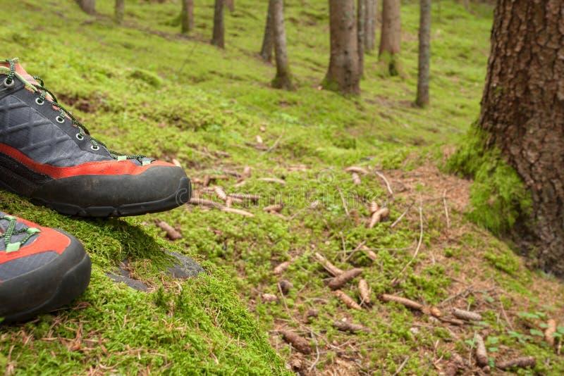 Im Wald gehen lang ein Weg lizenzfreies stockfoto