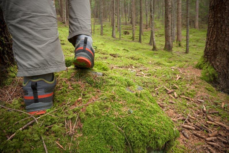 Im Wald gehen lang ein Weg lizenzfreie stockfotos