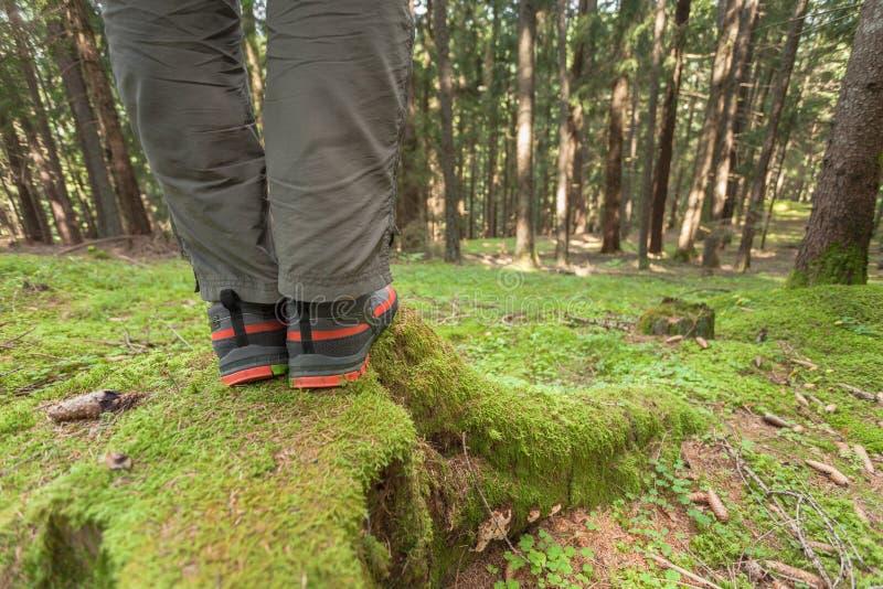 Im Wald gehen lang ein Weg stockfotos
