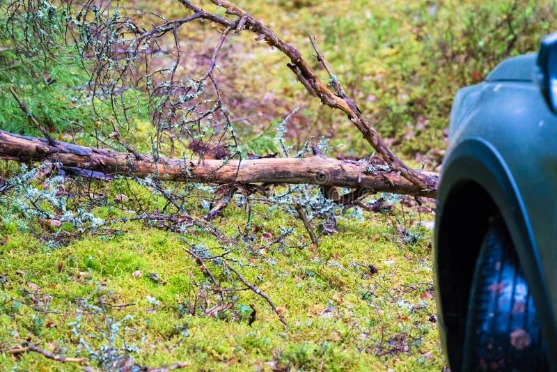 Im Wald gibt es eine trockene Niederlassung vor der Maschine lizenzfreie stockfotos