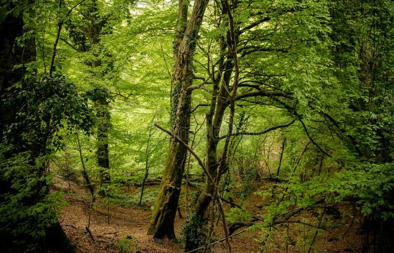 Download Im Wald Im Herbst Mit Gefallenem Laub Stockfoto - Bild von outdoor, umgebung: 106802934