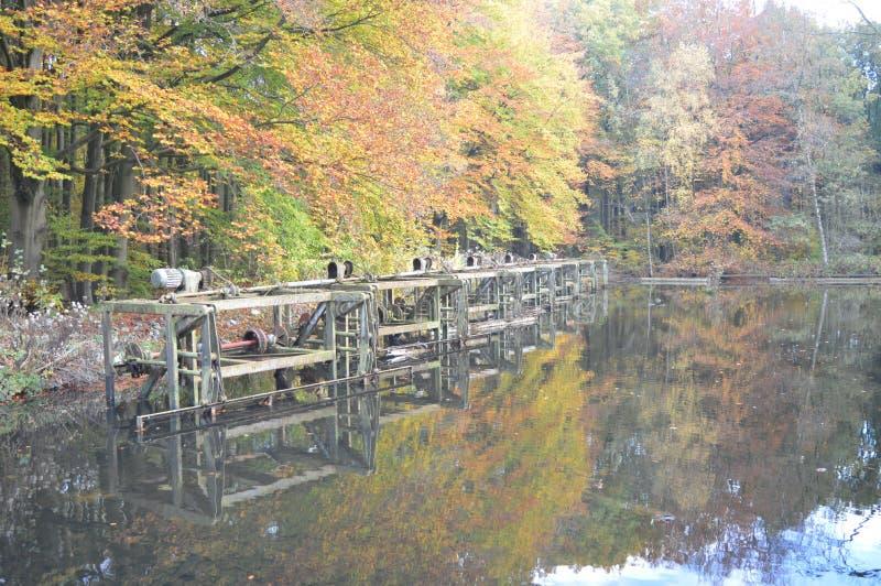 Im Wald Noordoostpolder, die Niederlande lizenzfreie stockbilder