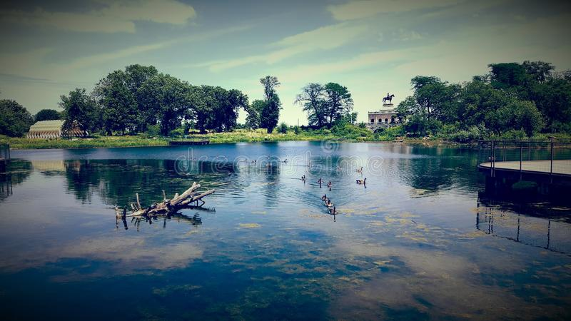 Im Wasser stockbilder