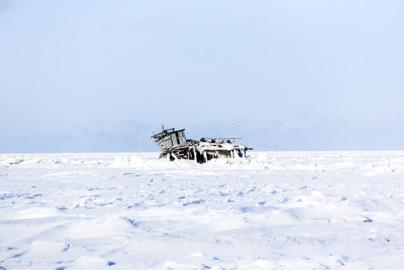 Im Winter stockfotos