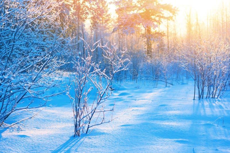Download Im Winterholz stockbild. Bild von schönheit, nave, leuchte - 106802459