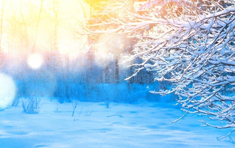 Download Im Winterholz stockbild. Bild von hintergrund, nave - 106802473