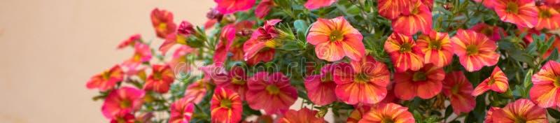 Image étroite des fleurs rouges photographie stock libre de droits