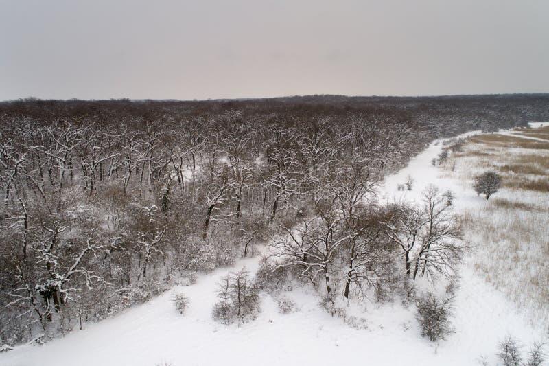Image aérienne de forêt à feuilles caduques couverte de neige photos libres de droits