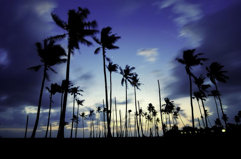 Image abstract and blurred. beautiful silhouette palm tree during blue hour. royalty free stock photo