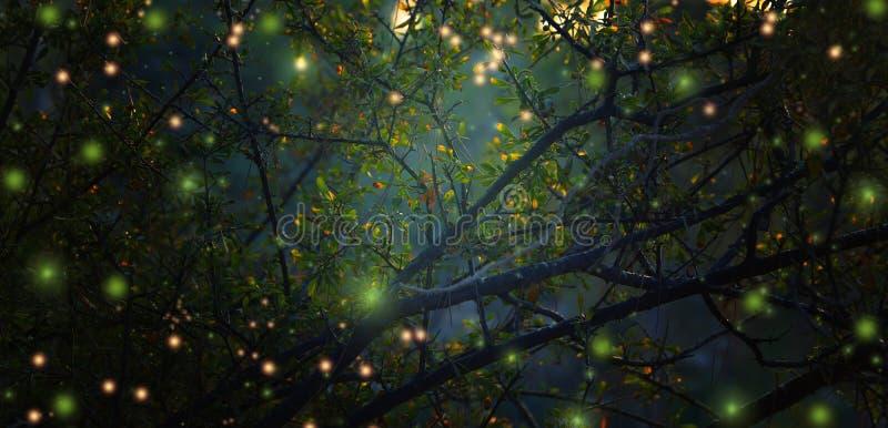 Image abstraite et magique du vol de luciole dans la forêt de nuit images stock