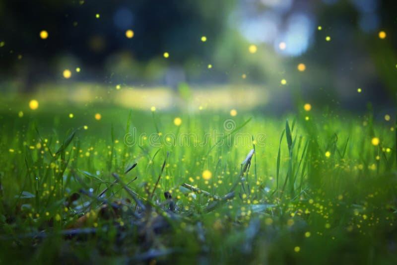 Image abstraite et magique du vol de luciole dans le concept de conte de fées de forêt de nuit photographie stock libre de droits