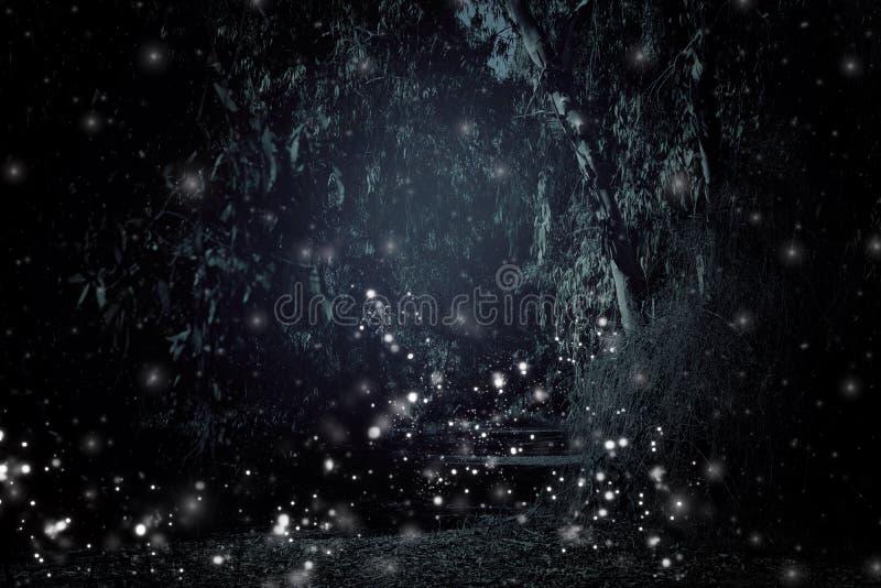 Image abstraite et magique du vol de luciole dans le concept de conte de fées de forêt de nuit photo libre de droits
