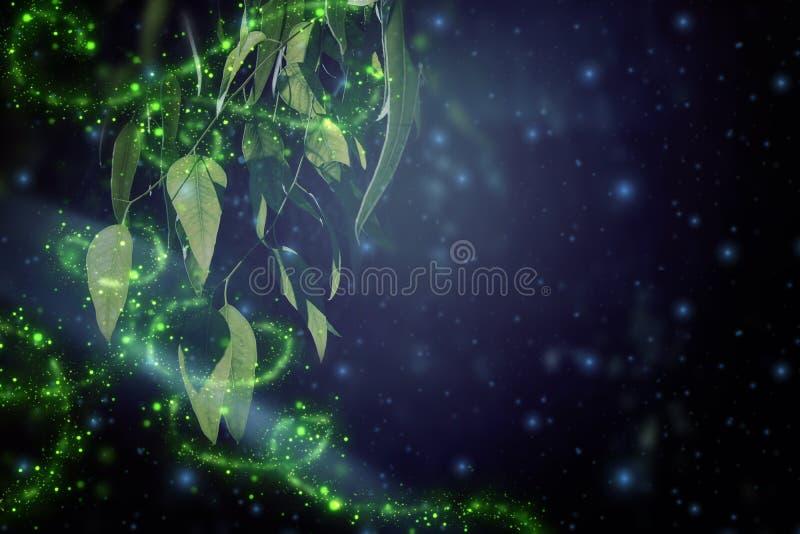 Image abstraite et magique du vol de luciole dans le concept de conte de fées de forêt de nuit photos libres de droits
