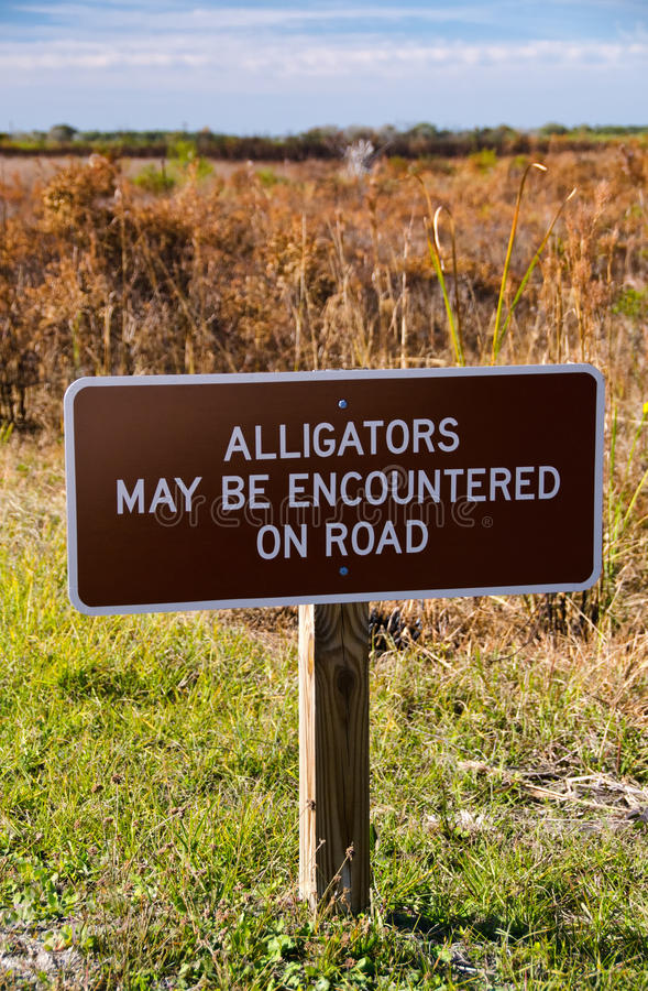 An image of Alligators may be encountered on road sign. A warning sign about alligators on road, Kissimmee Prairie State Park, Florida stock image