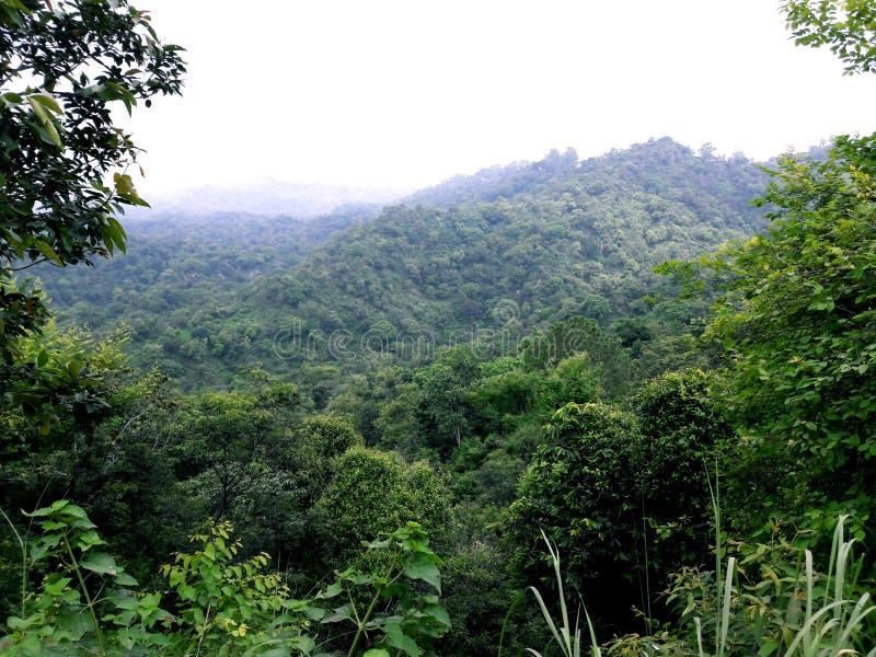 Image arbres de vert d'Inde, Pendjab images libres de droits