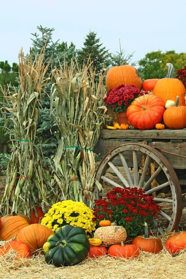 Image of Autumn stock photos