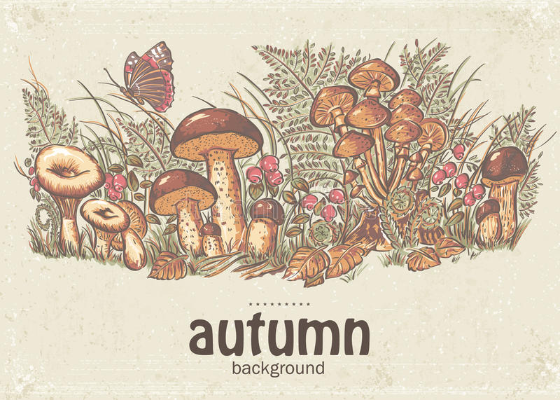 Image of autumn background with white mushrooms, chanterelles and oyster mushrooms stock illustration