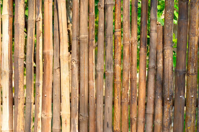 Download Bamboo fence stock photo. Image of line, nature, bundle - 29809630