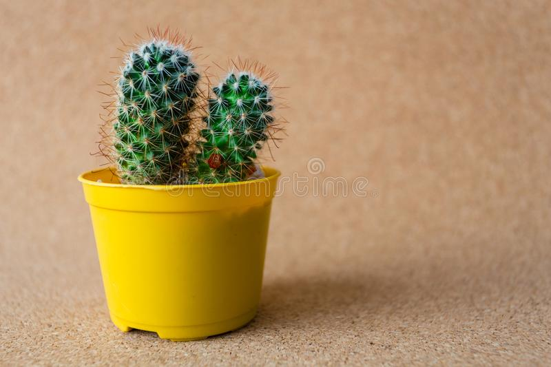 My Beautiful Cactus. Image of a beautiful cactus with backgrouns. Many colors and very nice stock images