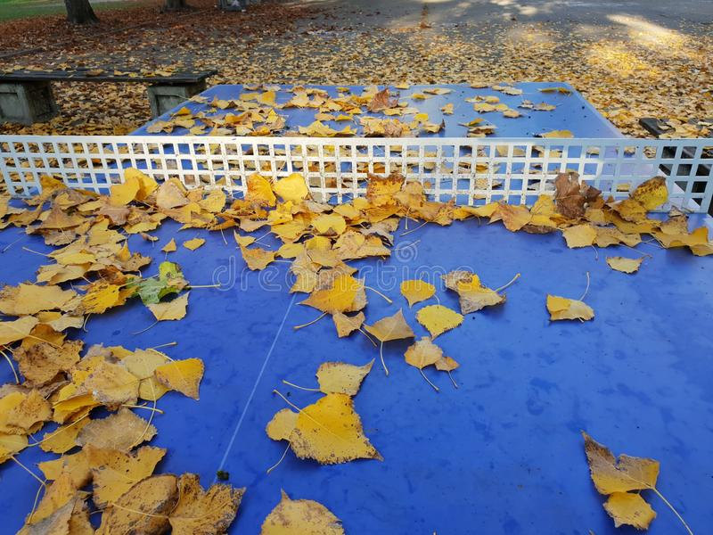 Image of blue table tennis table with yellow leaf royalty free stock images