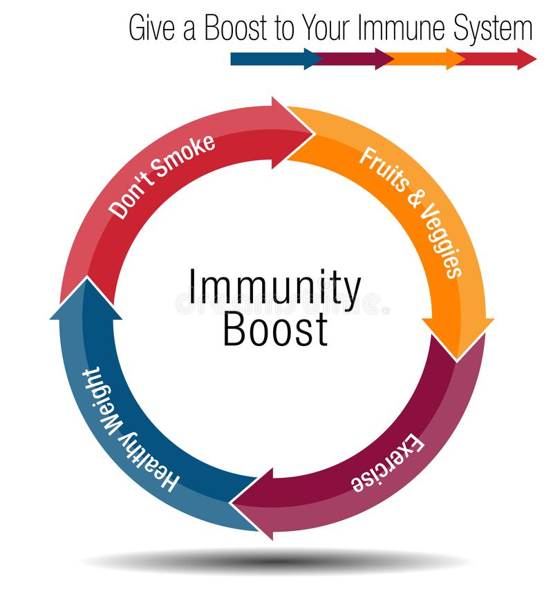 Boost and Stregthen Your Immune System Chart. An image of a Boost and Stregthen Your Immune System Chart royalty free illustration