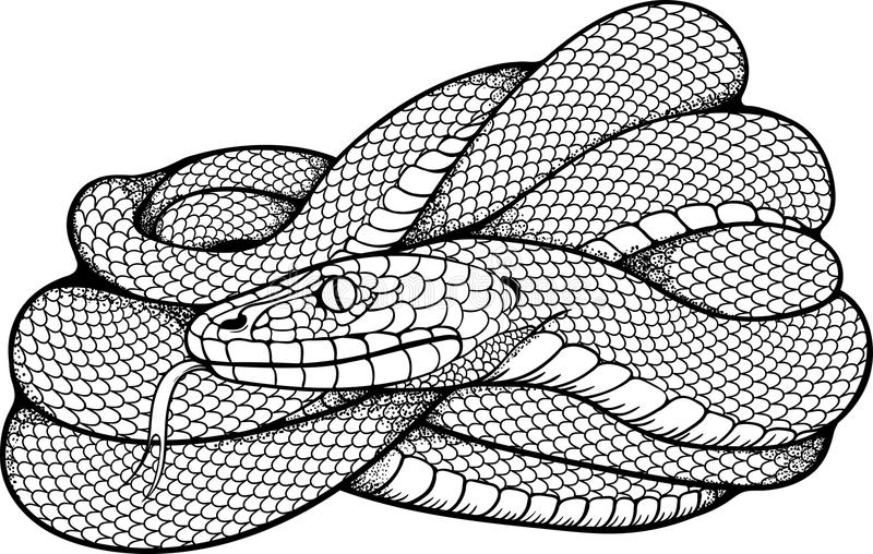 Image of coiled snake royalty free illustration