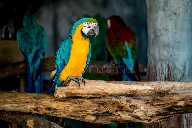 Colorful macaw on branch. Image of Colorful macaw on branch royalty free stock photography