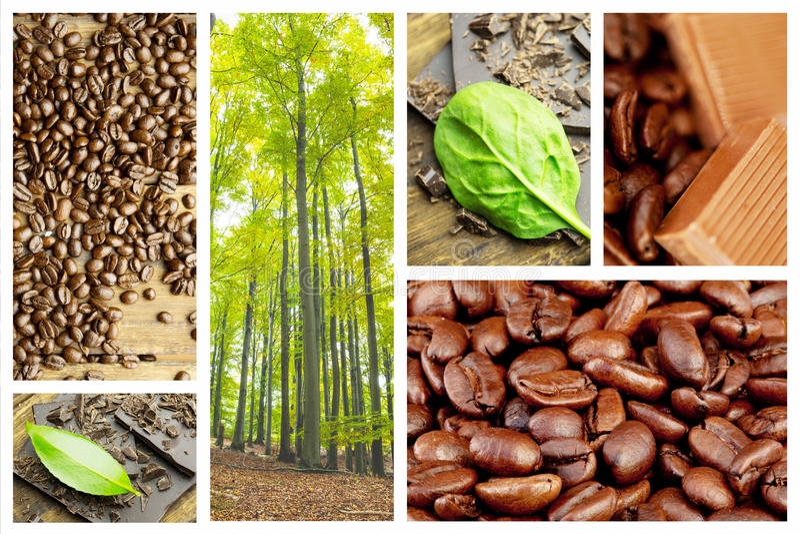 Image composée des arbres luxuriants dans la forêt image libre de droits
