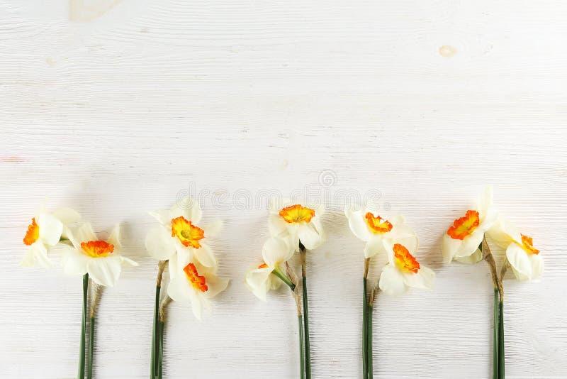 Image conceptuelle d'humeur de ressort Fleurs saisonni?res sur le fond lumineux images stock