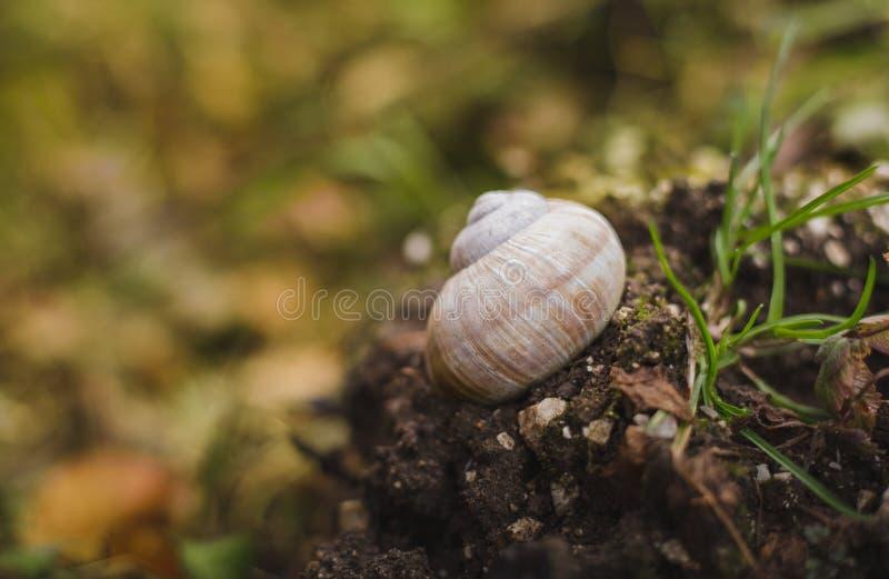 Image - coquille d'escargot sur le sol dans la forêt avec la verdure sur le fond sur le coucher du soleil avec l'herbe sur le fon photo libre de droits