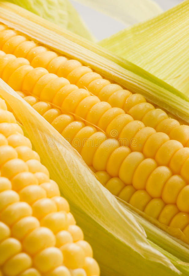 Download Image Of Corn Ears Royalty Free Stock Image - Image: 21255796