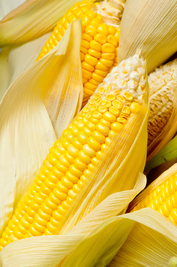 Download Image of Corns stock photo. Image of summer, nobody, freshness - 21284086