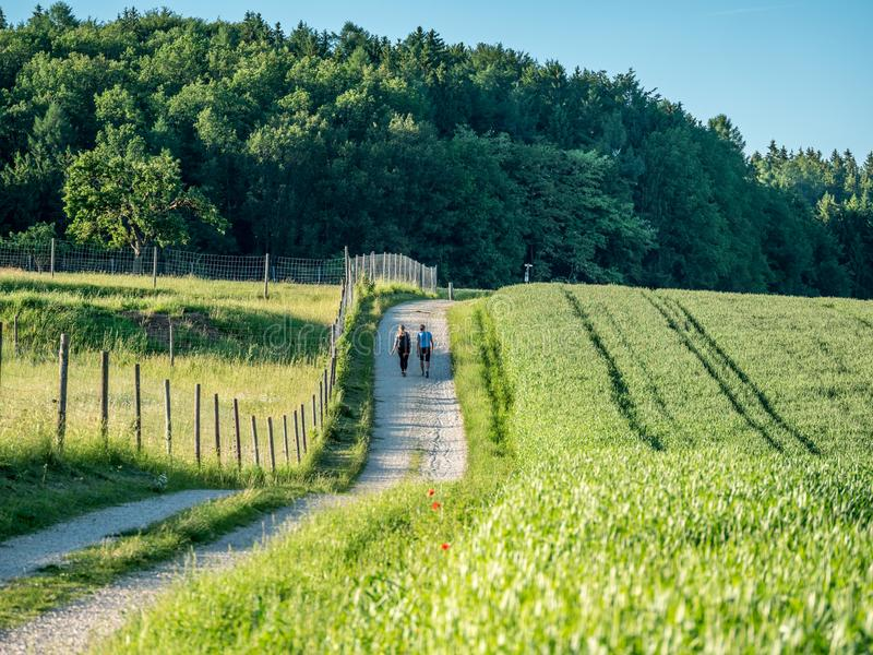 Image of couple walking next to cornfield stock photography
