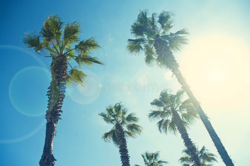 image Croix-traitée des palmiers de dessous le jour ensoleillé photo libre de droits